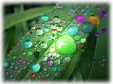 colorful raindrops on long leaf colorful rainbow water