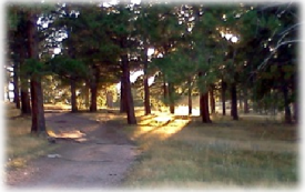 the sun shining through the trees hiking path