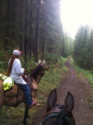 horse ride through woods on a long path Silverwillow Trail Rides at Stone Gate Inn B&B