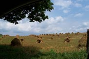 Hay Fields in amish country ohio