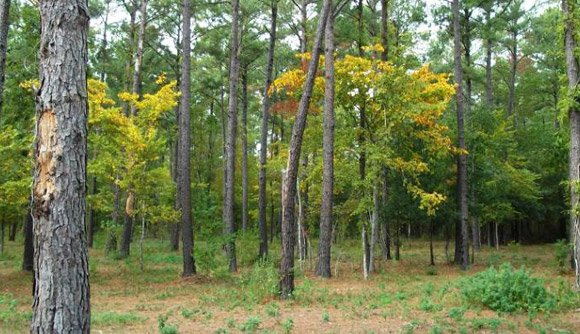 Trees at Windsong Hollow Ranch in Liverpool, Texas
