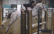 Uranium horse jumping