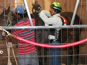 staff breaking a horse