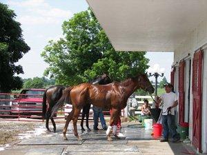 Horses at Mercury Equine