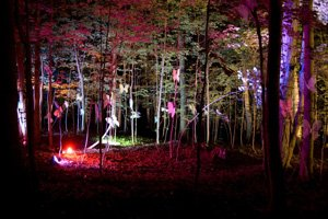 picture of trees lit with colored lights at night at the Heron