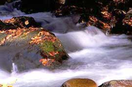 Stream in the Great Smokey&rsquo;s National Park