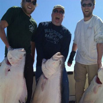 Alaska Halibut fresh huge from Anchor Point