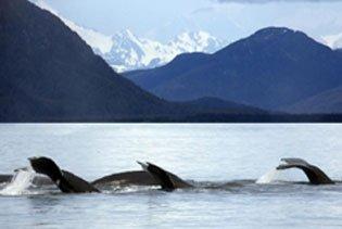 Kenai Fjords Cruise