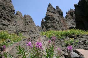 hoodoo peaks and wildflowers in yellowstone national park
