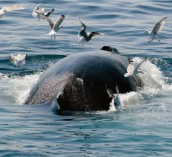 Whale and Seabird Watching Package at Hillsdale House Inn