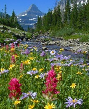 wildflowers at Glacier National Park Near Candlewycke Inn