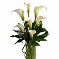 White Calla Lilies Floral Arrangement