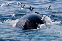 Whale Watching Package at Penny House Inn on Cape Cod