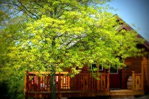 Get'n Squirrelly cabin at Eureka Sunset - Eureka Springs, AR