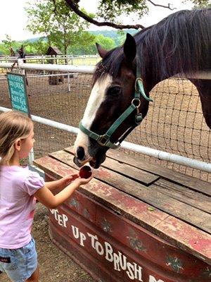 Girl feeding horse at Country Woods Inn in Glen Rose TX