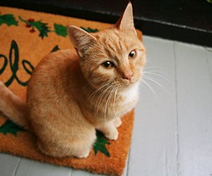 Cat at High Meadows Vineyard Inn in Scottsville, Virgina
