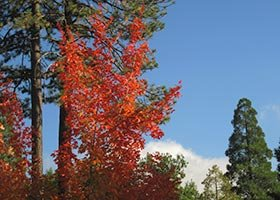 fall at The North Shore Inn in Crestline, California