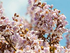 Flowers at Annapolis Historic Gardens in Nova Scotia