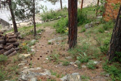 Hiking Trails at Swan Hill Bed and Breakfast in Polson Montana