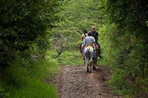 Horseback riding near William Seward in Westfield, New York