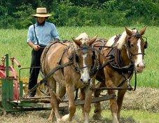 Amish Culture in Millersburg, Ohio
