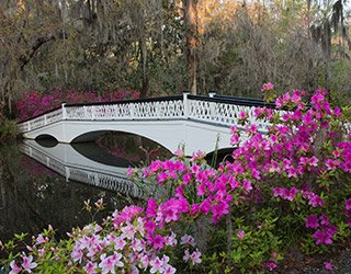 Magnolia Plantation in Charleston, South Carolina