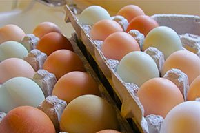 fresh farm eggs near Walnut Street Inn in Springfield, Missouri
