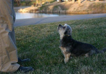 Dog Training & Obedience Salt Lake City Utah