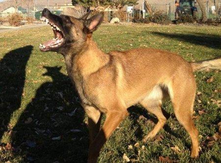 Aggressive Dog Training Salt Lake City Utah