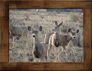 Wild Deer at Syringa Lodge