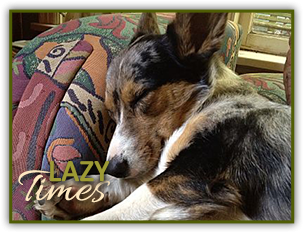 Lazy Times dog sleeping