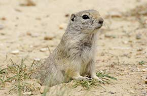 Prairie Dog Town in Oakley, Kansas