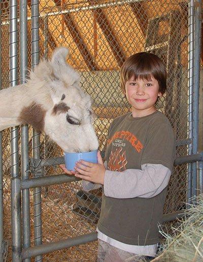 Feeding Llamas at Pine Knot Guest Ranch