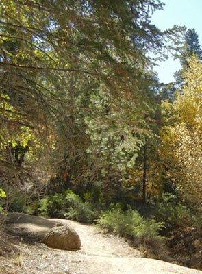Hiking in Big Bear California