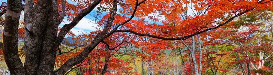 Fall and Autumn Activites near PineCrest in Gorham, ME
