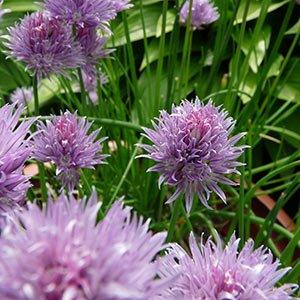 Flowers at PineCrest Inn in Gorham, Maine