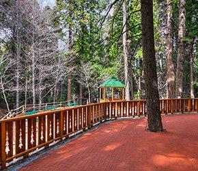 Events Area at Arrowhead Tree Top Lodge