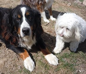 Rocky and Chester the dogs at Lake View Inn in Wolfeboro, NH
