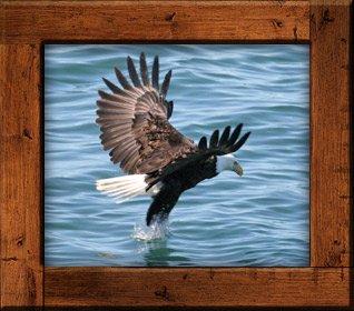 Eagle in Cordova, Alaska