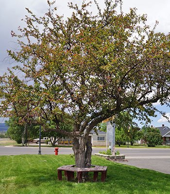 Canyon Lodge Motel Tree