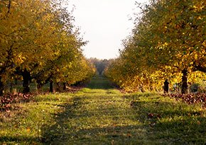 Cornell Orchards near City Lights Inn in Ithaca, New York