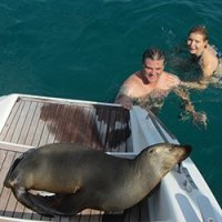 Sea lion on Blue Moon Charters out of Annapolis, Maryland