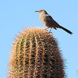 Birds near Casa de San Pedro