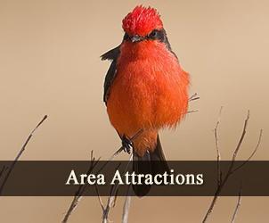 Area Attractions Near Casa de San Pedro in Southeast Arizona