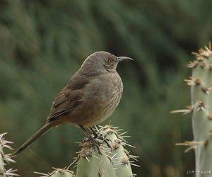 Birding near Casa de San Pedro