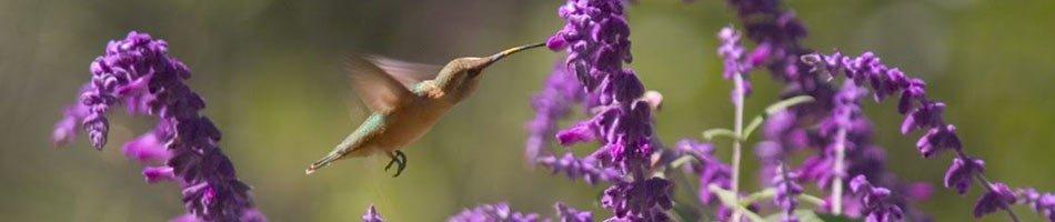 Hummingbird near Casa de San Pedro