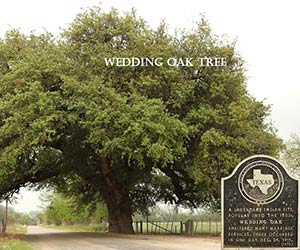 Wedding Oak in San Saba, TX