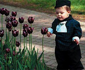 boy near the tulips at the tulip festival