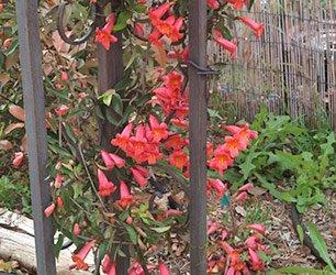 Flowers at Phoenix Nest Guest Houses