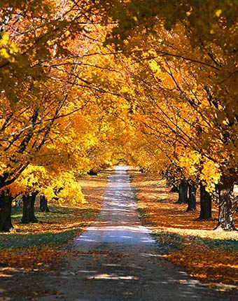 fall color Package at A Breath of Heaven Bed and Breakfast